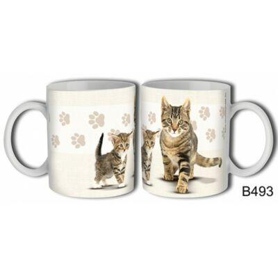 Bögre - Bengáli cica