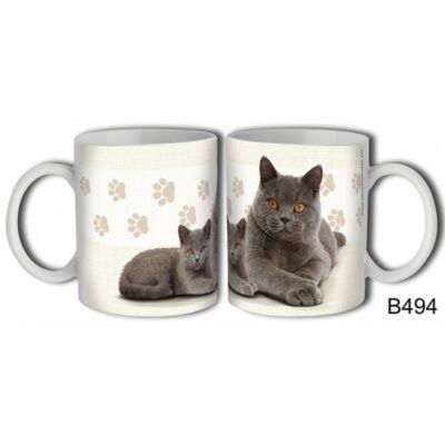 Bögre - Brit rövidszőrű cica